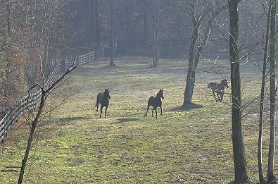 Our lower pasture in early spring