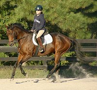 Thoroughbred mare doing dressage.