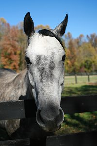 Artic Gamble is a Thoroughbred Horse for Sale at Bits & Bytes Farm.