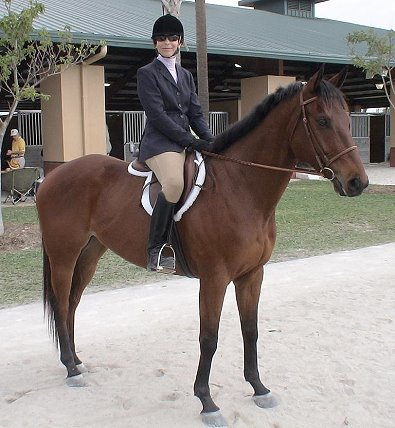 Austin's Wolf is an OTTB who competes in dressage, hunters and jumpers and wins at all of them!