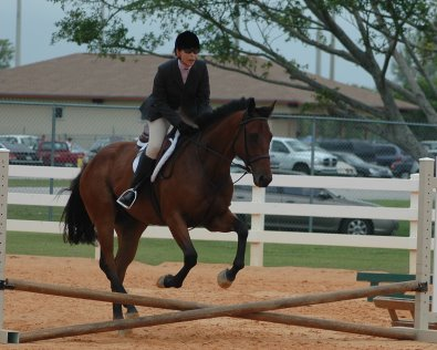 OTTB Austin's Wof is ready for bigger fences.