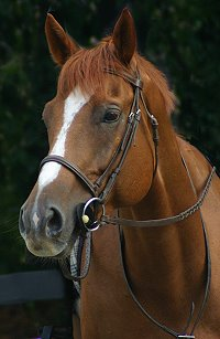 Click here to see photos of Baileysontherocks when he was a Horse For Sale at Bits & Bytes Farm.