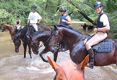 Swimming Thoroughbreds