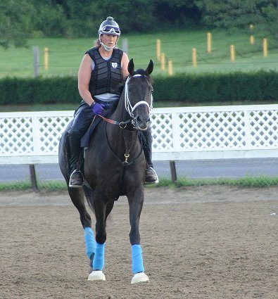 Blue Electra - Thoroughbred sport horse prospect