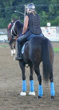 Blue Electra - Thoroughbred horse for sale