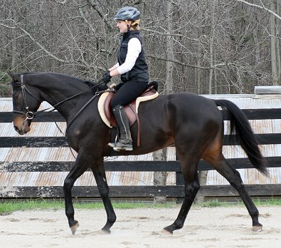 Bounced is our newest horse for sale at Bits & Bytes Farm.