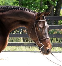 OTTB Bounced is a horse for sale at Bits & Bytes Farm