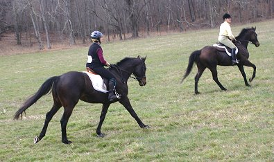 Horse for Sale Bounced and OTTB - K O River Crossing.