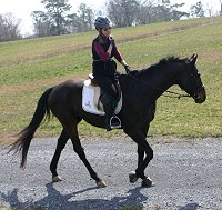 OTTB - Bounced at the hunter pace.