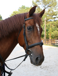 Brett is one of our three new horses for sale at Bits & Bytes Farm