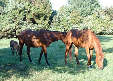 Chance, Luke and Brett enjoying a large pasture together.