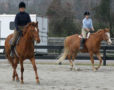 """Brett"" at a recent show where he debuted his canter and finished in third place!"