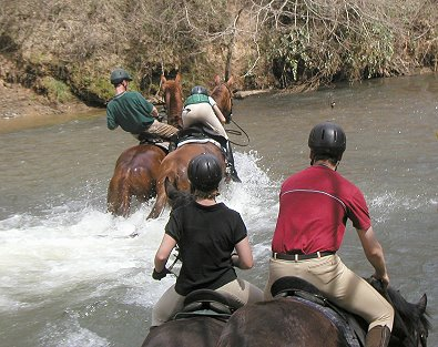 River crossing on our horses for sale.