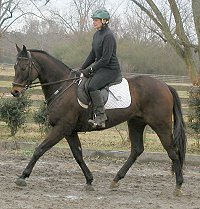 Captain Arias- Thoroughbred for sale