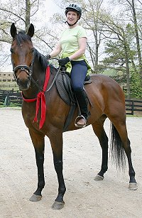 Former Bits & Bytes Farm Thoroughbred Horse for Sale - Chouette Player. - June 2005