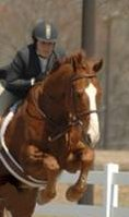 Our Boy Darcy is a former race horse who is now a show jumper. Summer 2007