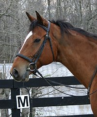 Daring Deeds is one our our Thoroughbred horses for sale at Bits & Bytes Farm.
