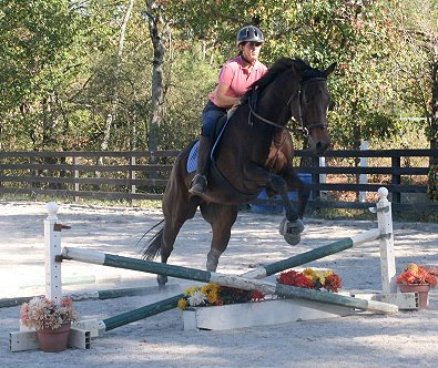horses jumping over fences. Training over fences with