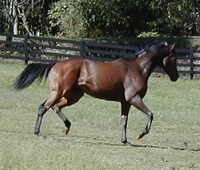 French Made was one of the first horses for sale ever at Bits & Bytes Farm. September 2001.