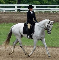 Grayboo is competeting in eventing competitions with his young owner Amanda Cunefare.