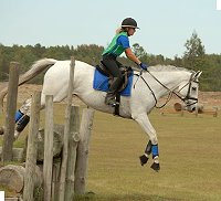 OTTB Grayboo competes in eventing.