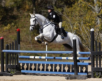 OTTB Grayboo finished double clear in stadium which moved them up to a 3 way tie for 1st place. November 18, 2007