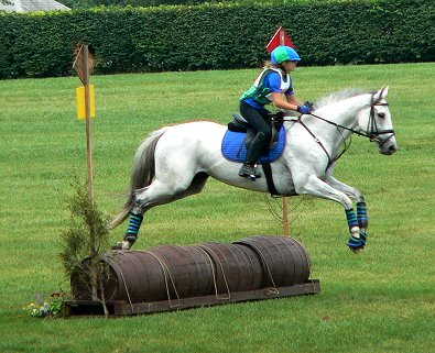 OTTB- Grayboo competes in combined training and cross-country.