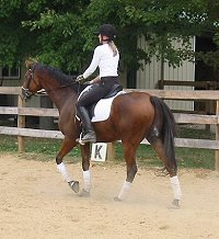 OTTB Heather's Best is training in dressage and jumping.