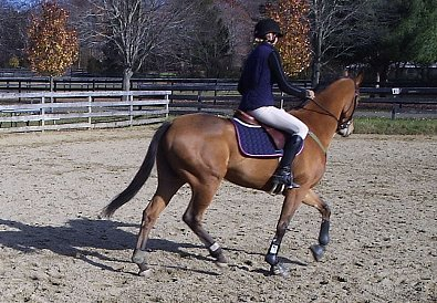 OTTB Heather's Best is now a Thorougbred sport horse.