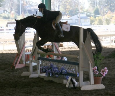 Irish Morning Mist and Megan Brown compete in jumper classes. November 2005