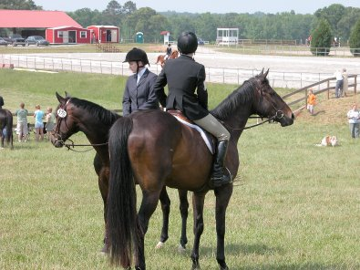 Te Conquistar (aka Mactavish) and Irish Morning Mist were both winners at the Big Bear Horse Trials.
