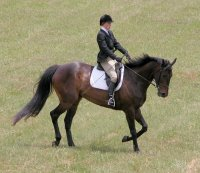 Thoroughbreds make great competitiors in eventing and hunter/jumper competitions.