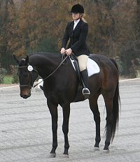 Irish Morning Mist and Megan Brown in their dressage test at Oxer Farm November 20, 2005