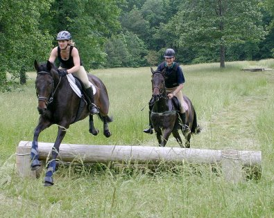 Joe Bear and Paula racing Irish Morning Mist and Gertjan over the cross-country course.