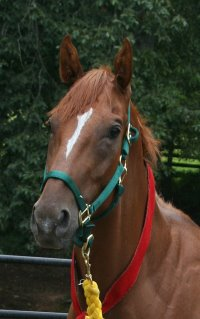 Light Artillery was purchased by Kriston Glushko in July 2005.