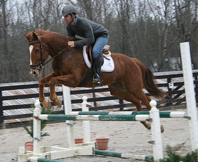 "Horse for sale - ""Lucky"". January 29, 2008"