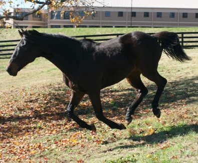 "OTTB Maximum Impact enjoys his turn out to the ""Max""!"
