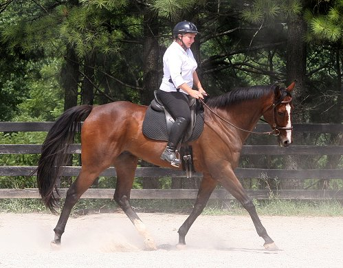 Thoroughbred Horse For Sale - Political Pull with visitor Susan Dye at Bits & Bytes Farm in Canton, GA.