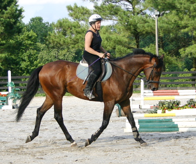 Vera Vogt and OTTB Pride of the Fox working on their dressage skills.