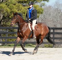 Thoroughbred horse for sale -Pride of the Fox - February 11, 2007