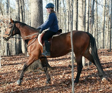 Thoroughbred horse for sale -Pride of the Fox February 11, 2007