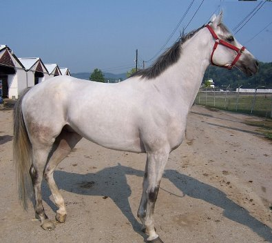 Allovertheplace was our August Prospect Two - grey gelding