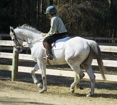 Grey horses for sale. Southern Pines, NC