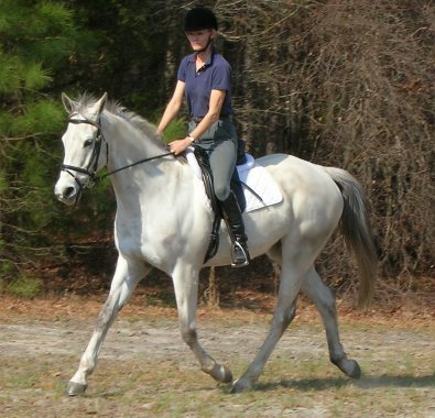 Gray horse for sale