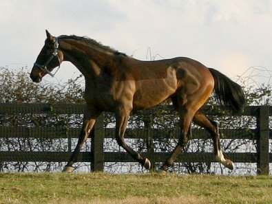Miss with Attitude has lovely movement and should be suitable for an eventing career.