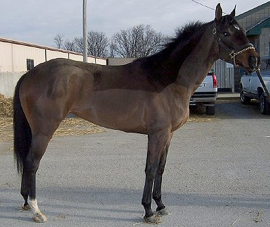 February - Horse for Sale - Prospect One