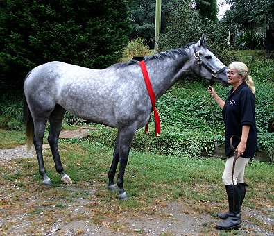 Allision bought Urbanissima off the Prospect Horses' page sight unseen.