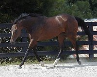 Thoroughbred horses for sale.