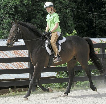 OTTB Queen's Rowdy Lad at Bits & Bytes Farm in June 2002