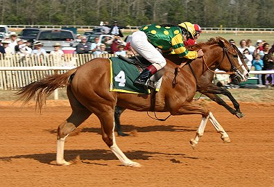 Aiken, SC has race trials for the young Thoroughbreds.